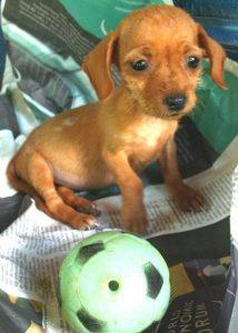 Essa é Hortelã, uma das minhas cadelinhas quando a achei.